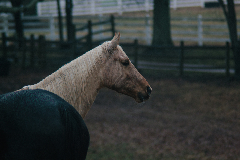 horse head and rear erick blackwood-6492 copy.jpg
