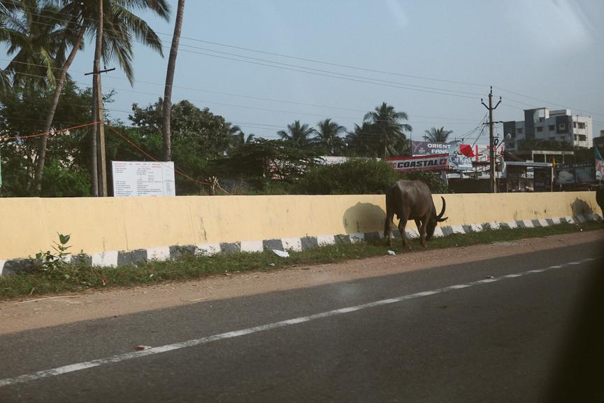 India2012WEB-523.jpg