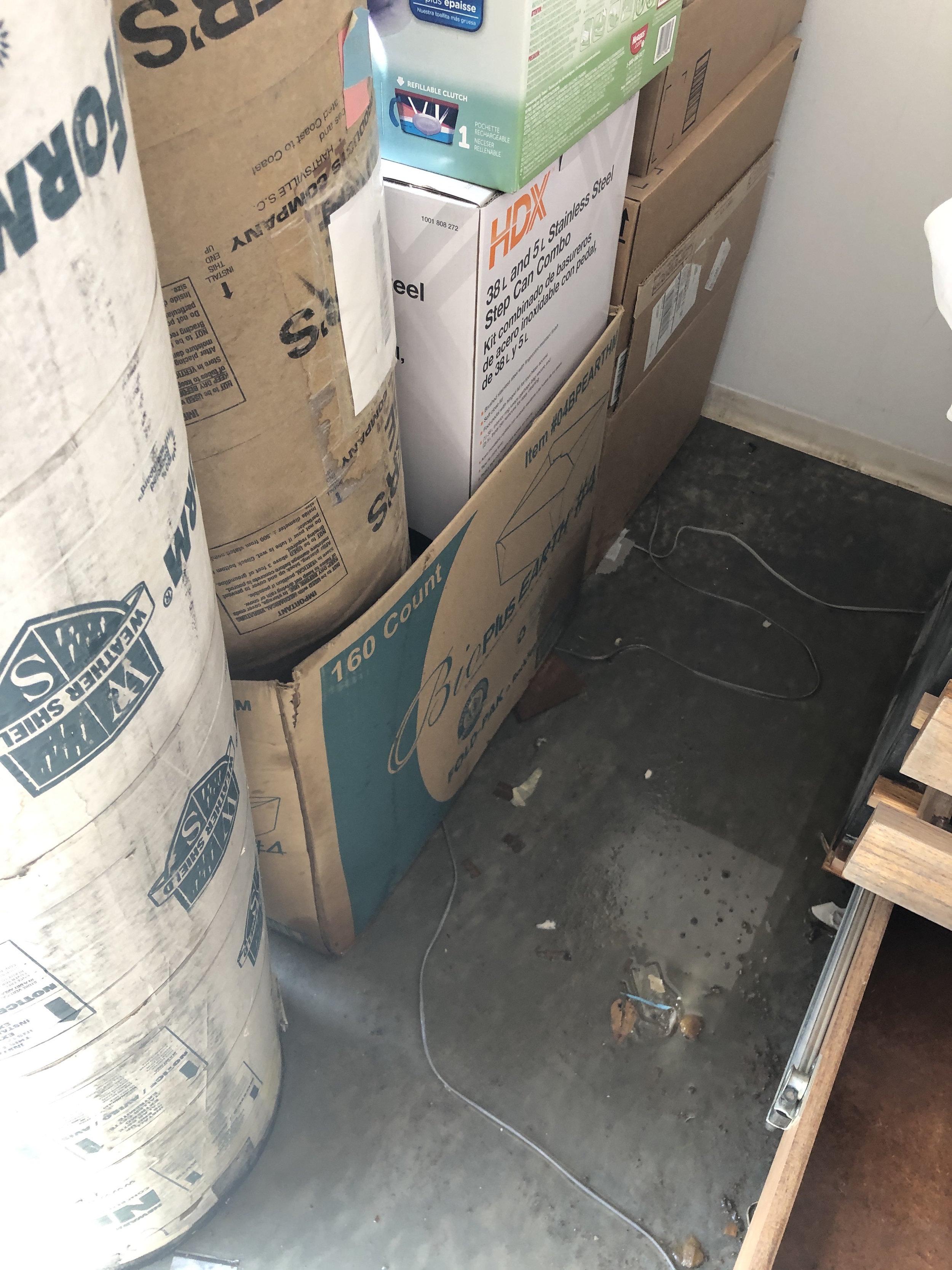 studio flood 6.jpg