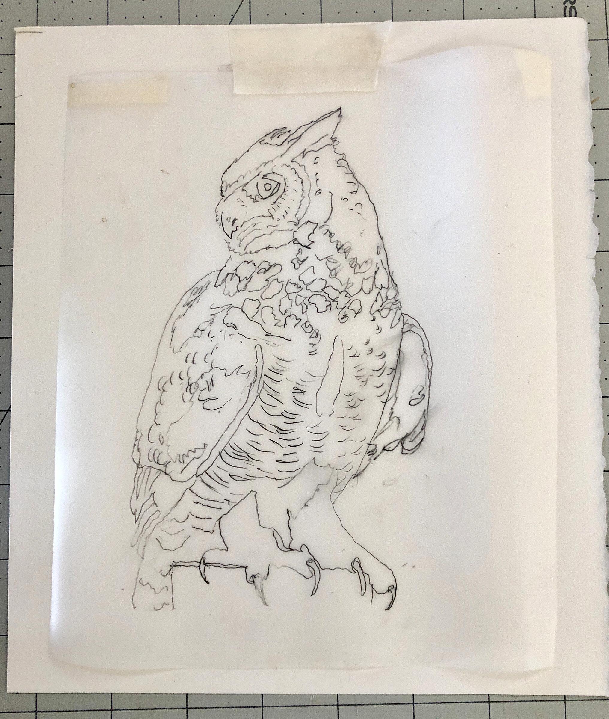 SITE-10-11-19 owl.jpg