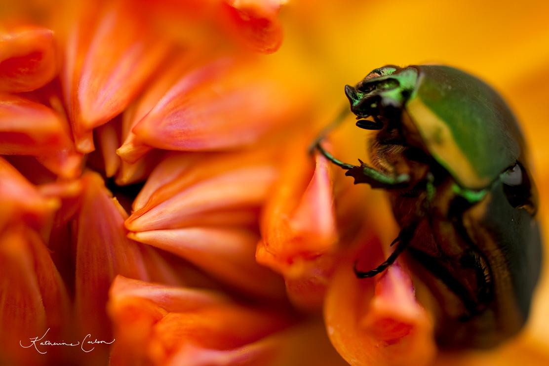 June Bug and Dahlia