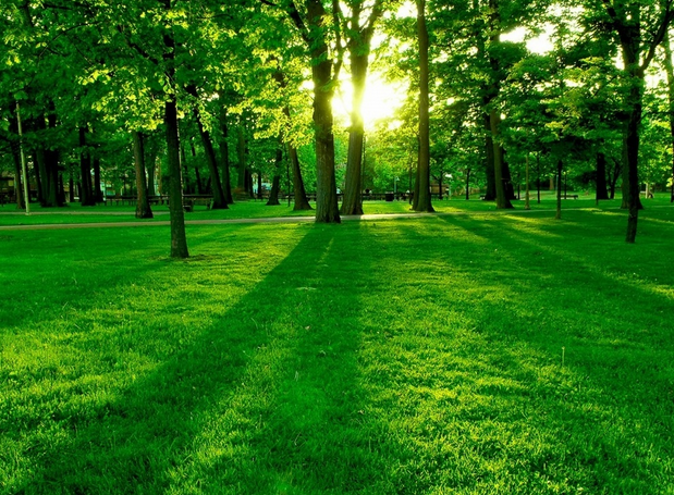 The Grass is green in the sunshine.