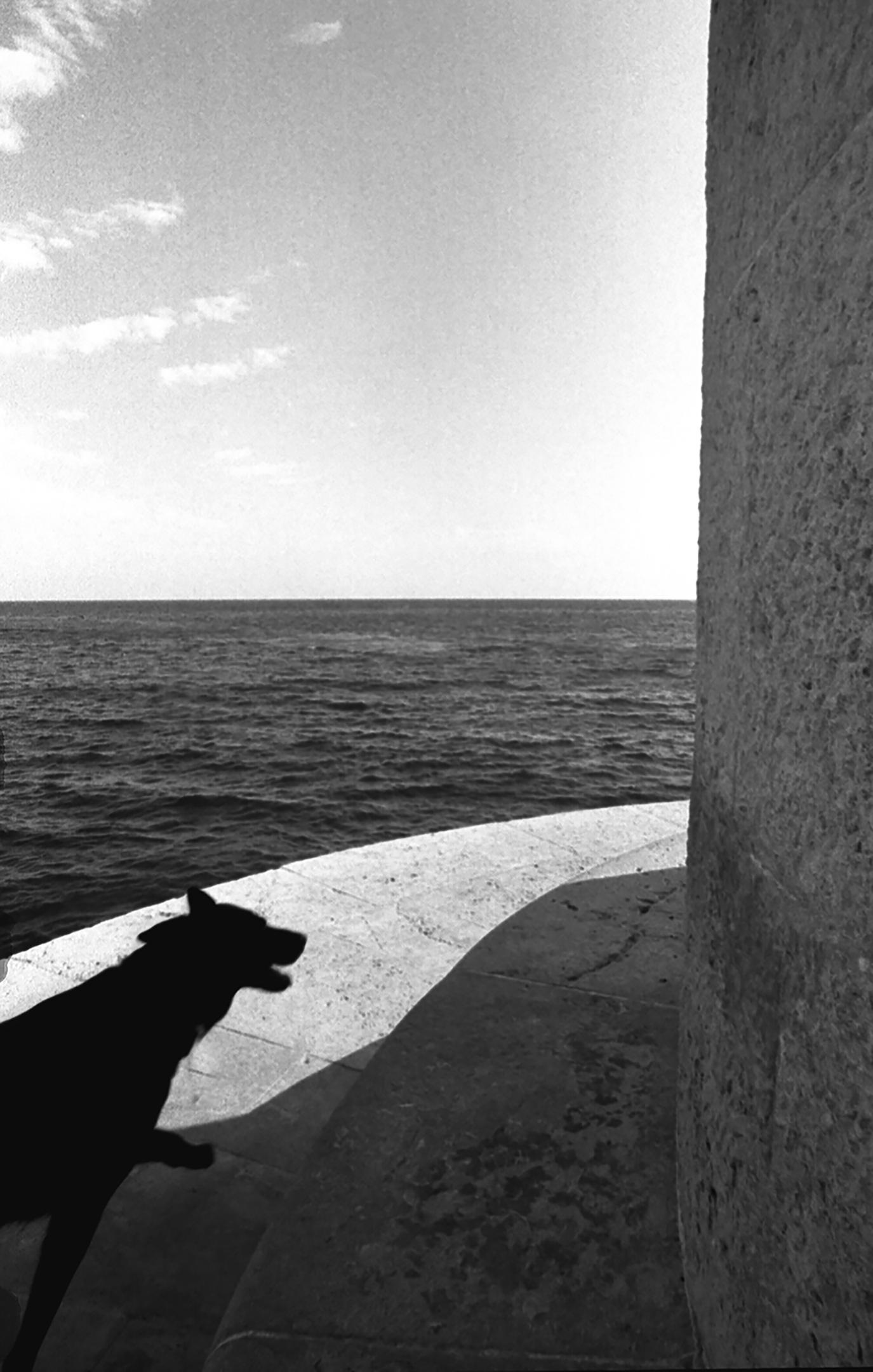 Black dog in Cassis