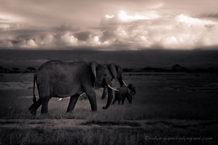 Amboseli, East Africa