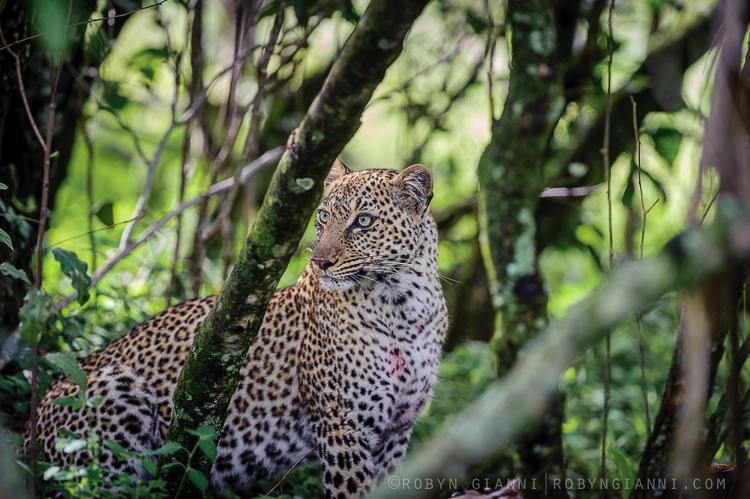 Olive's Cub, Maasai Mara, Kenya