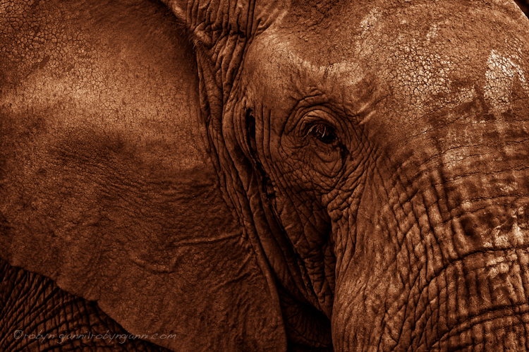 Amboseli National Park, East Africa