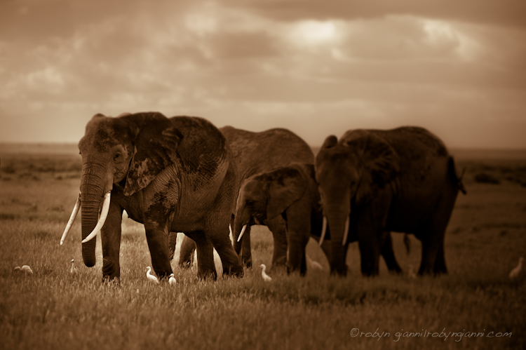 Elephant family, East Africa