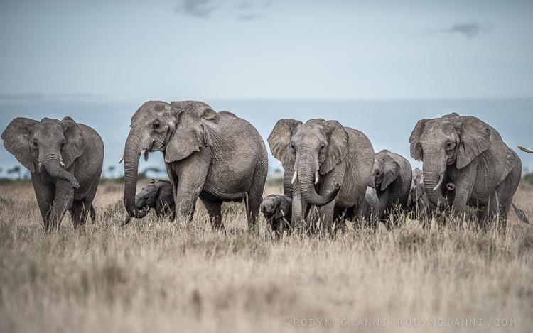 elephantherd.jpg