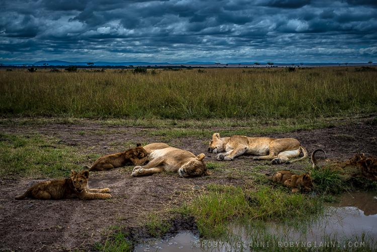 Serena Pride, East Africa