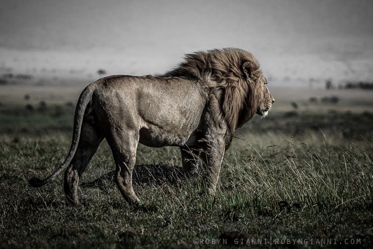 Maasai Mara, East Africa