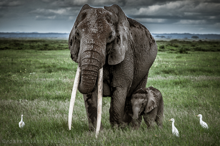 elephantfamily.jpg