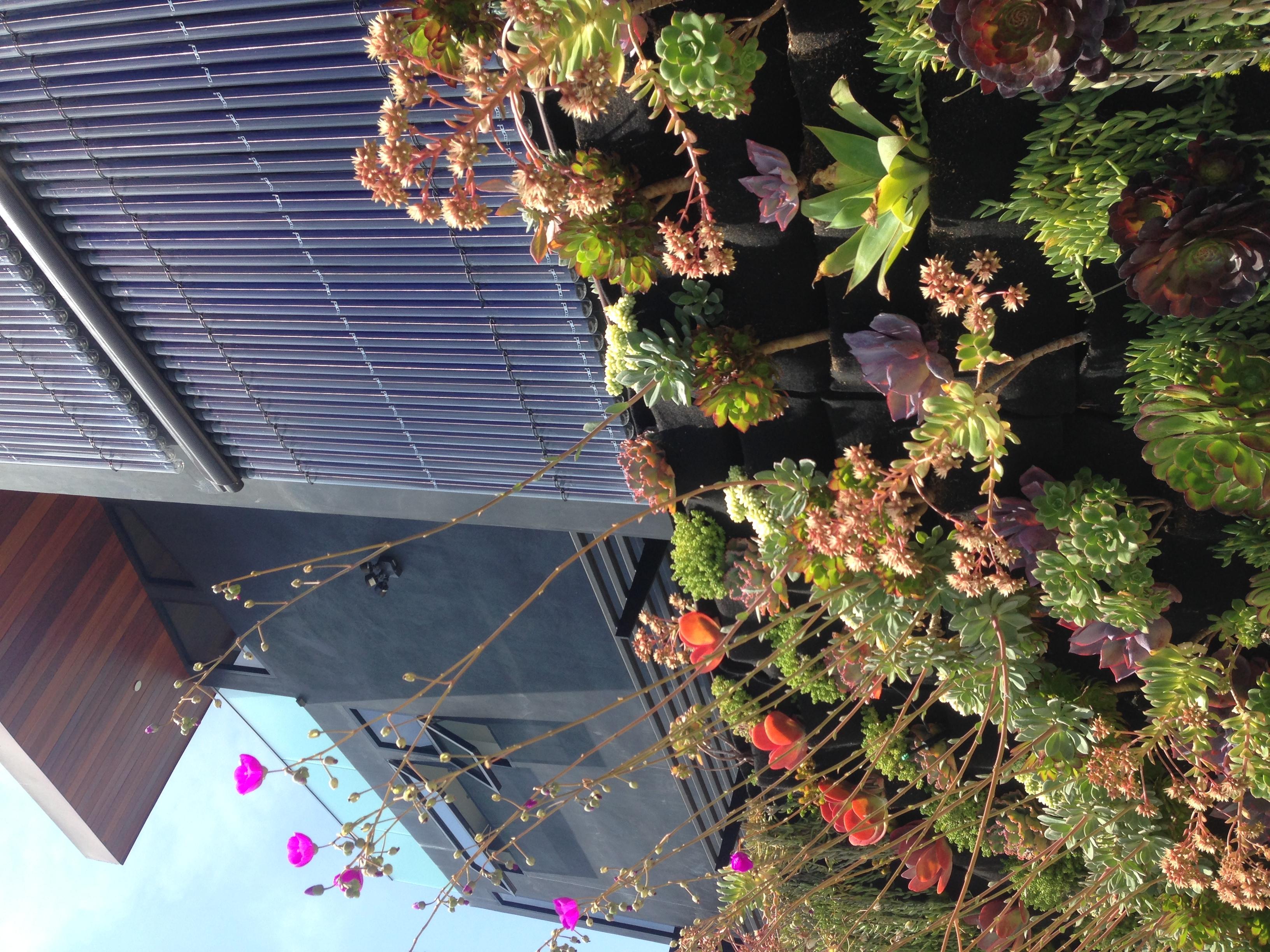 butterflyhousedavidhertzdwellgreensustainable