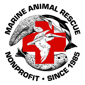 Marine Animal Rescue - Peter Wallerstein, director of Marine Animal Rescue in Los Angeles County, has always forged his own path. For well over twenty years, Peter has been the first responder; the hands-on caretaker of ailing marine animals all over the globe.