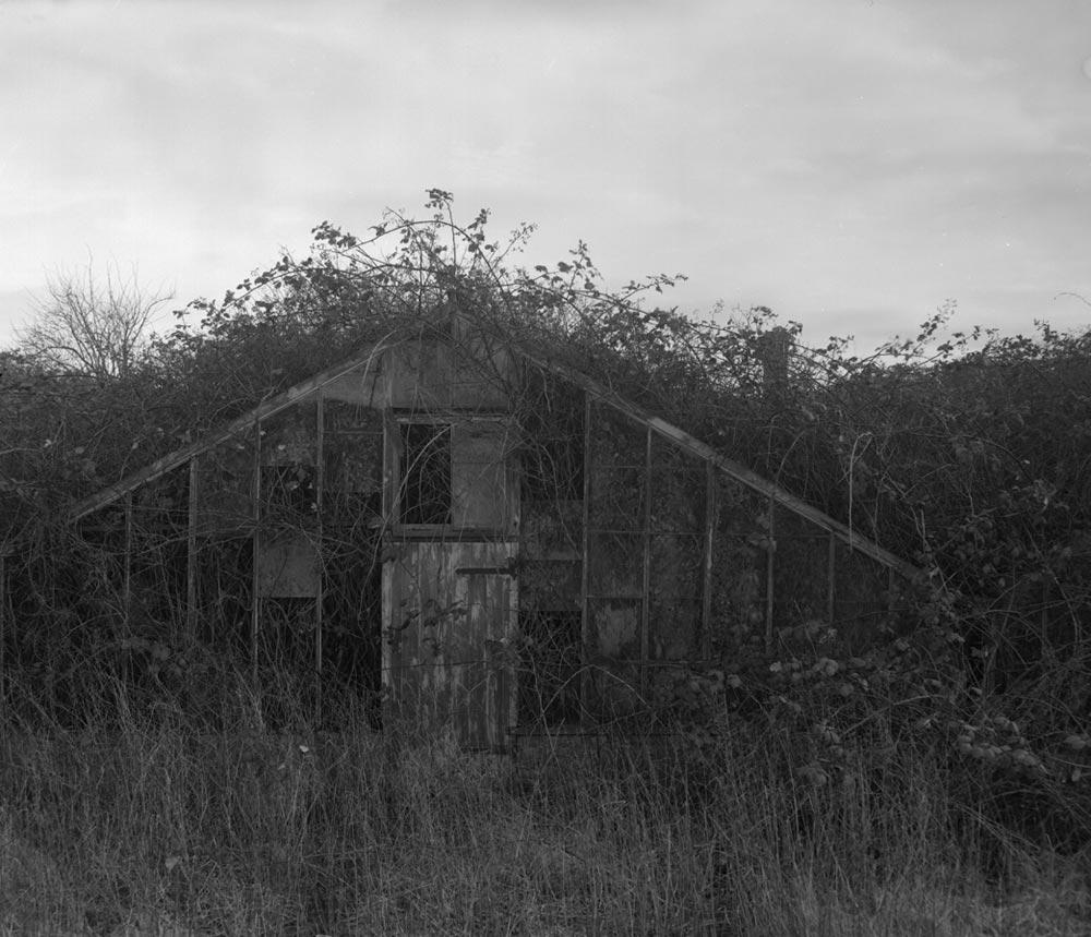 greenhouses-biggleswade.jpg