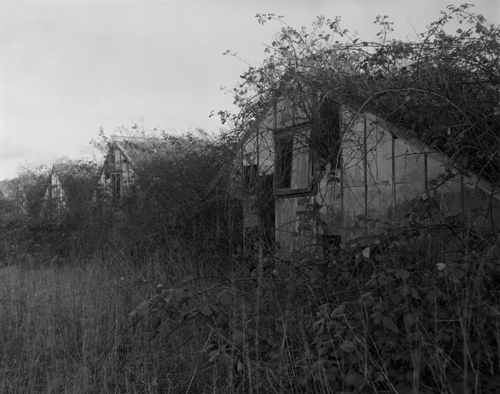 greenhouses-biggleswade2.jpg