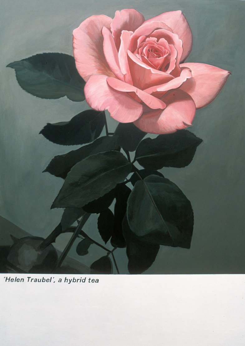 'Helen Traubel' - acrylic on board, approx. 40cm x 60cm