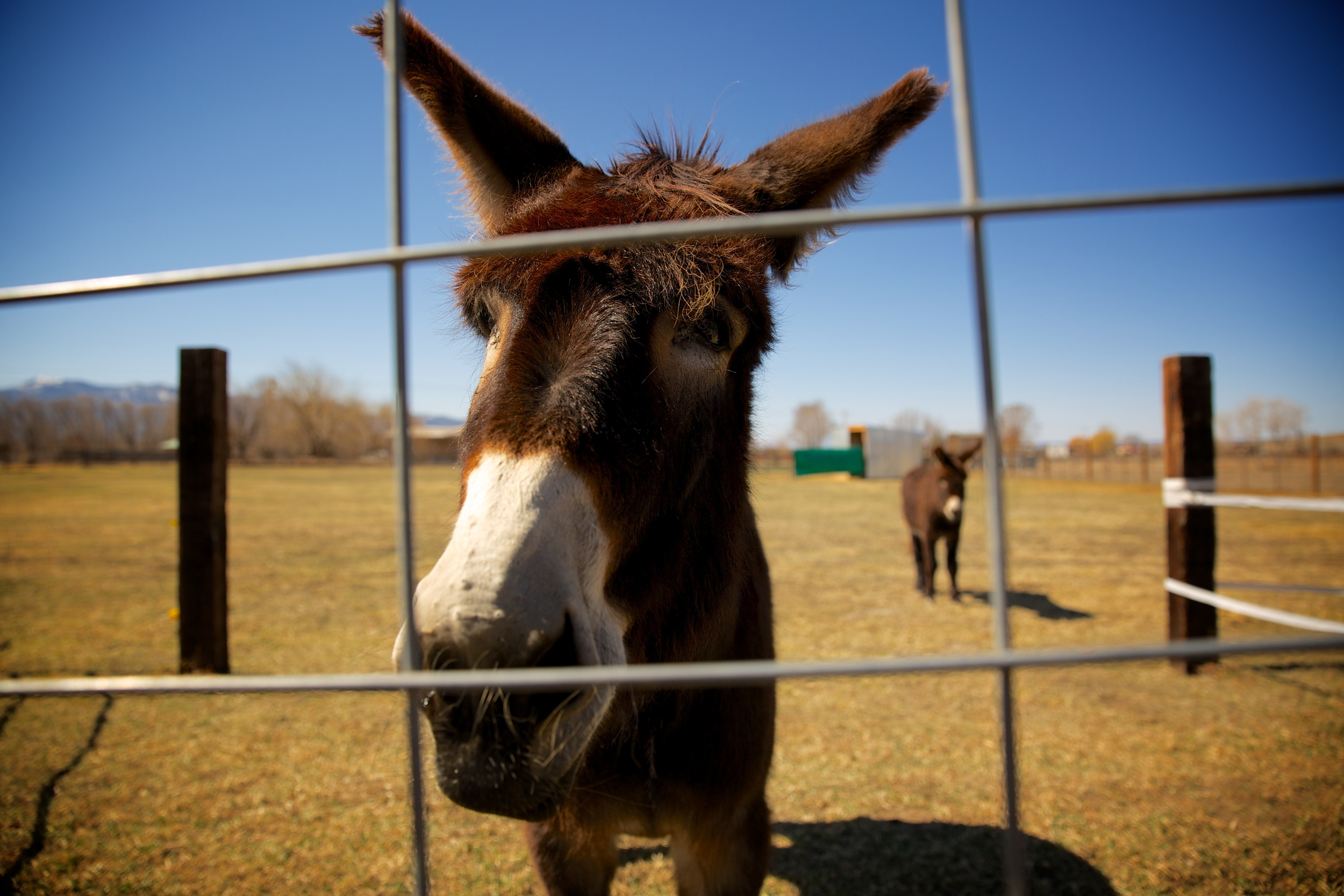 donkey-taos.jpg
