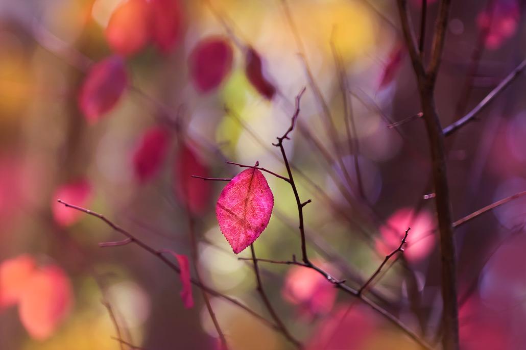 autumn_leaves_no1_9_1_08_8666_fnl.jpg