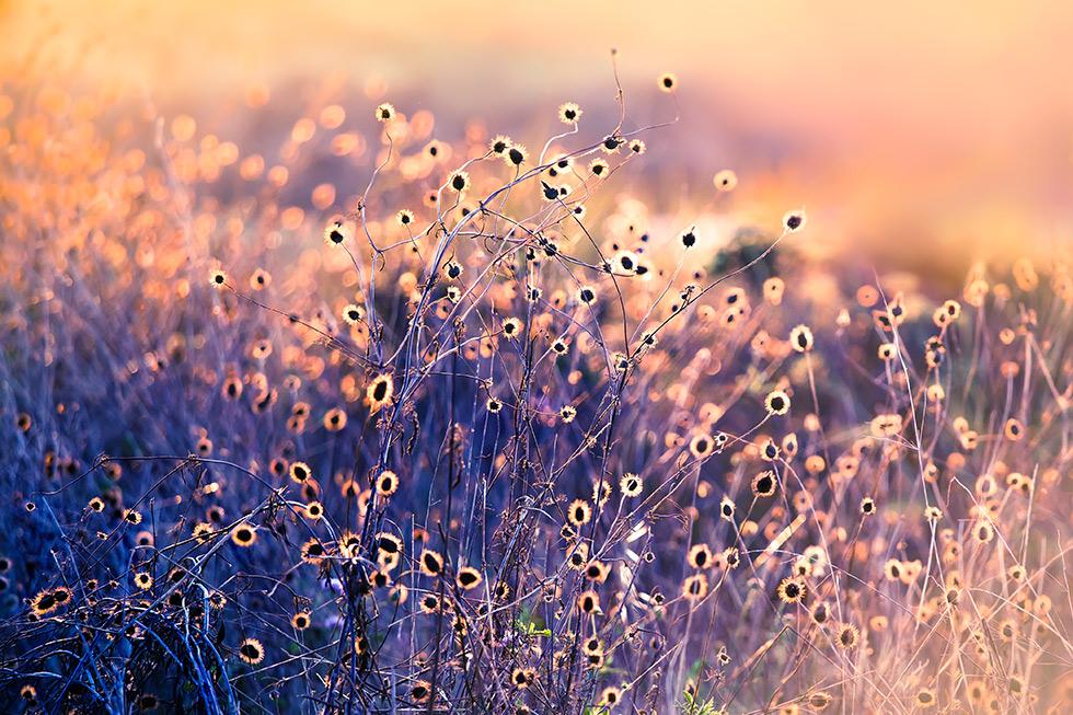 autumn_no11_danced_11_16_102263_fnl.jpg