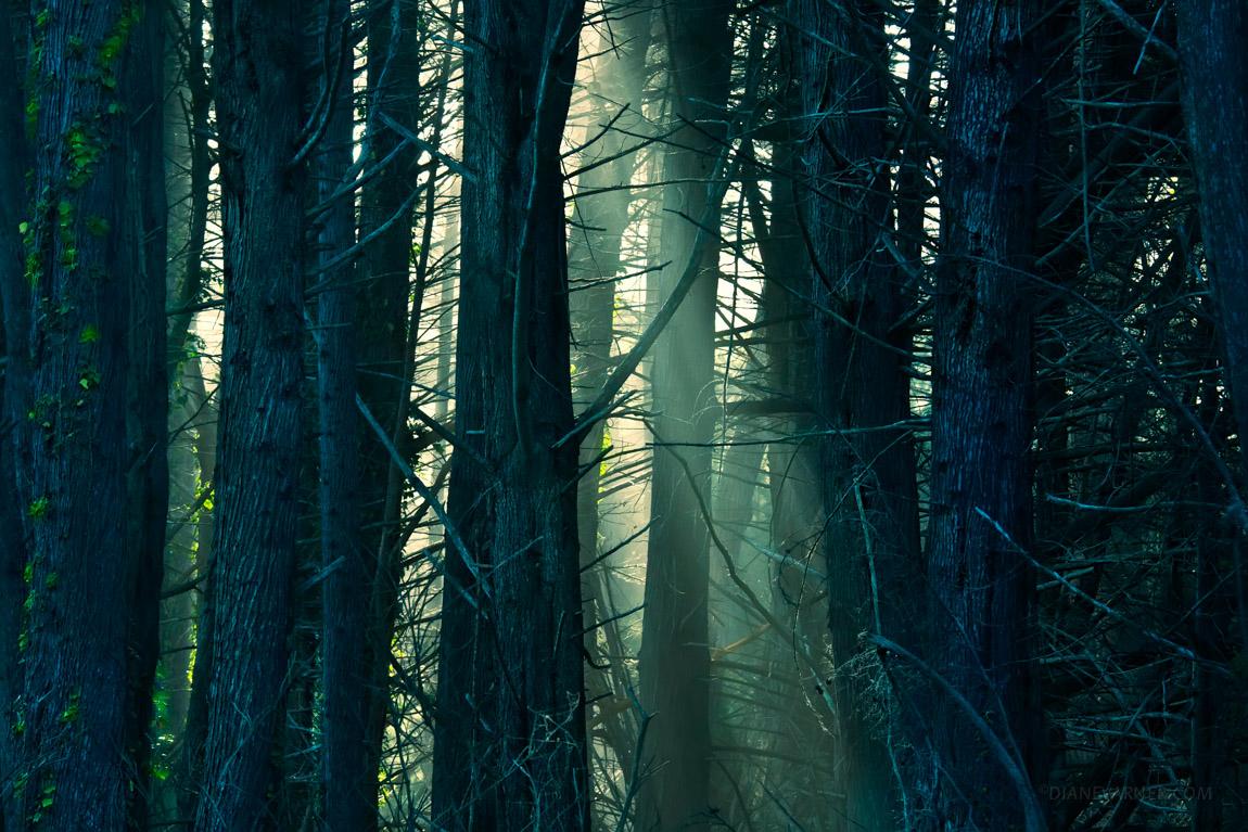 Light Illuminates the Nuances