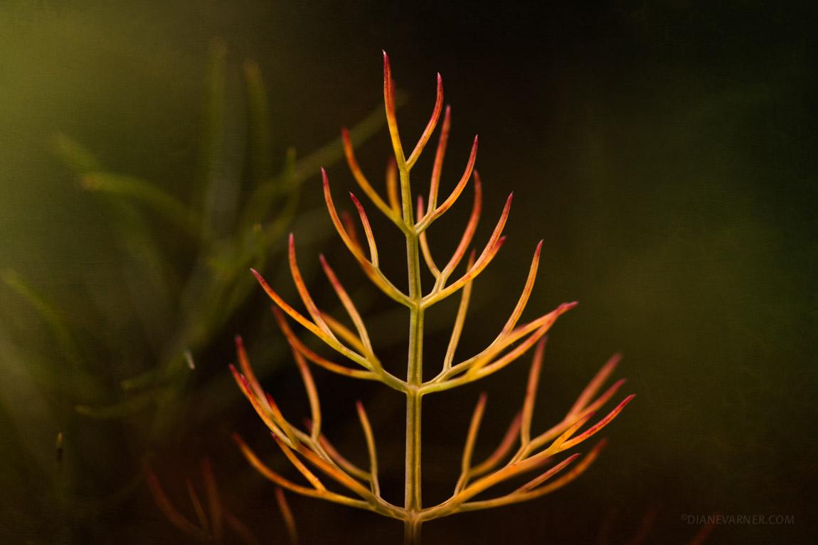 Like A Flame