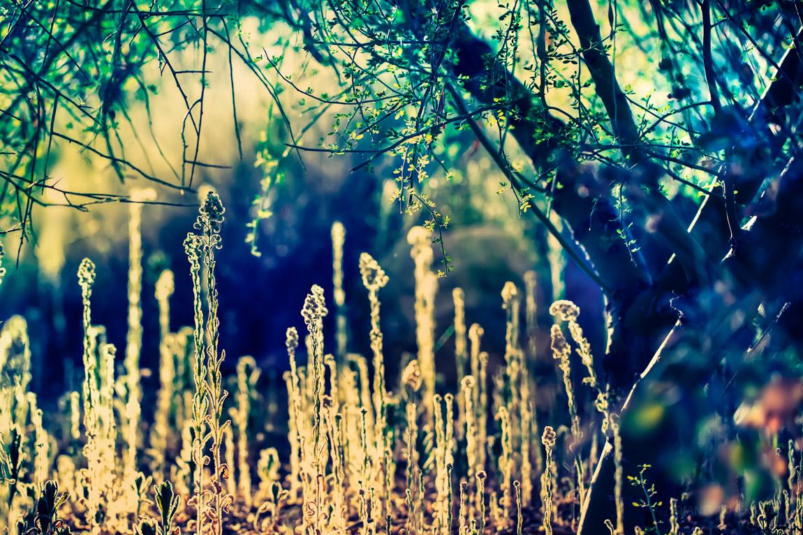 Autumn No 14 - Hope
