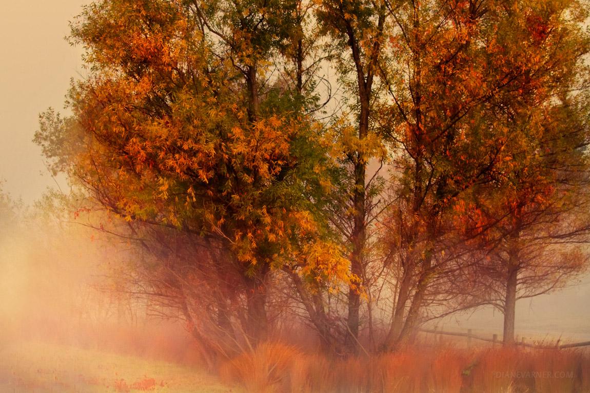 Autumn's Last Blush