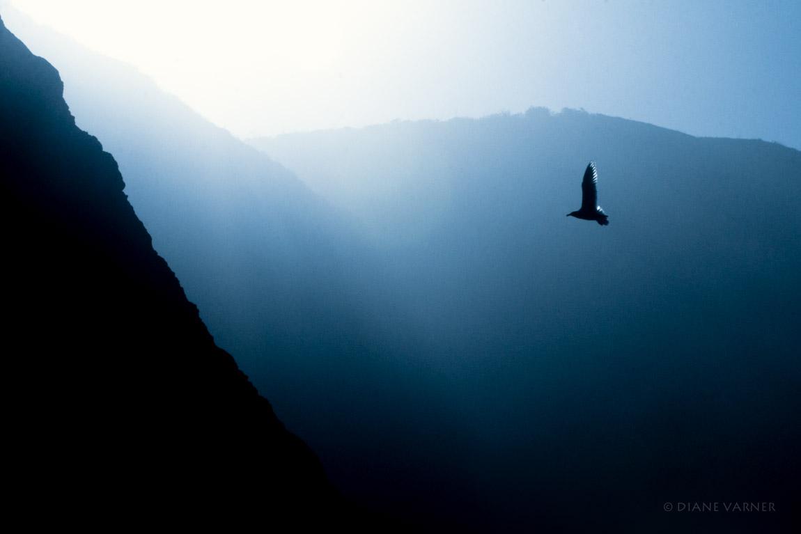 Ascending Fom Darkness