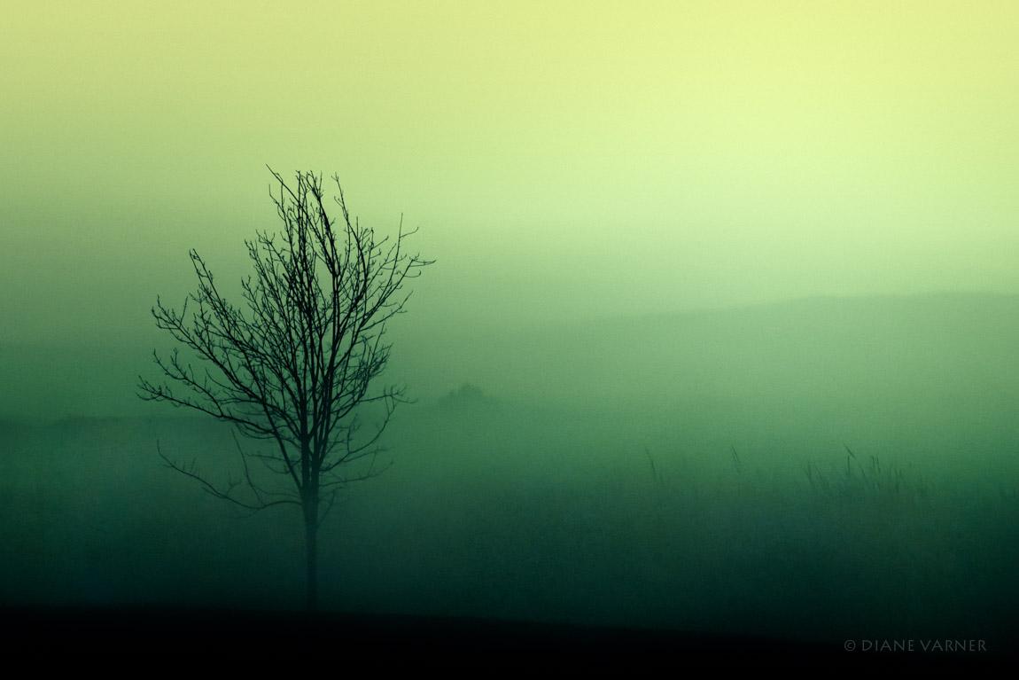 The Cherished Quietness