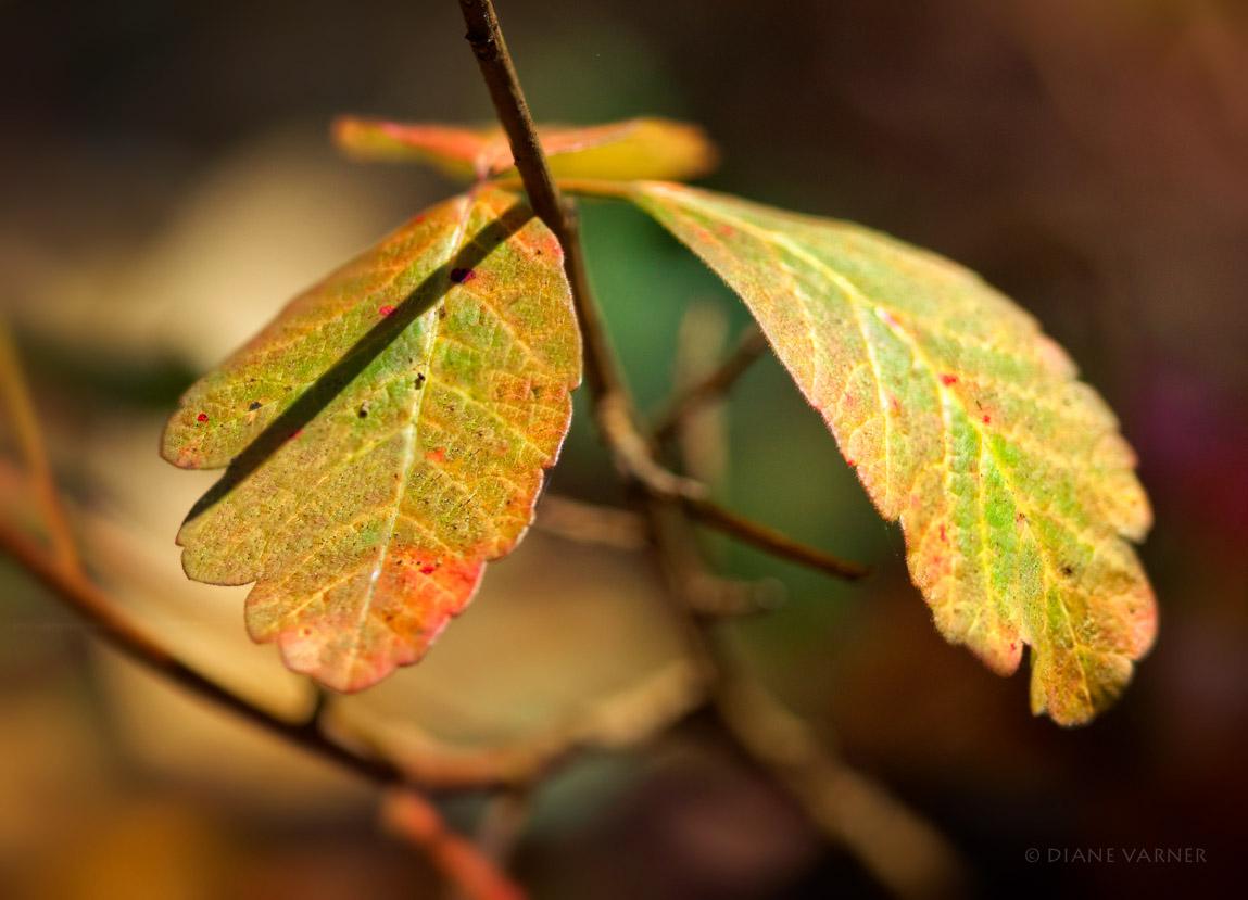 Autumn's Colors No. 4