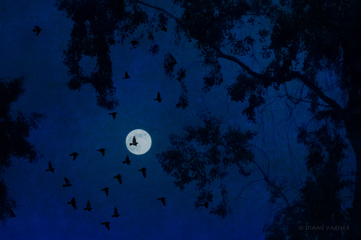 the_moon_soared_6_22_1395_fnl.jpg