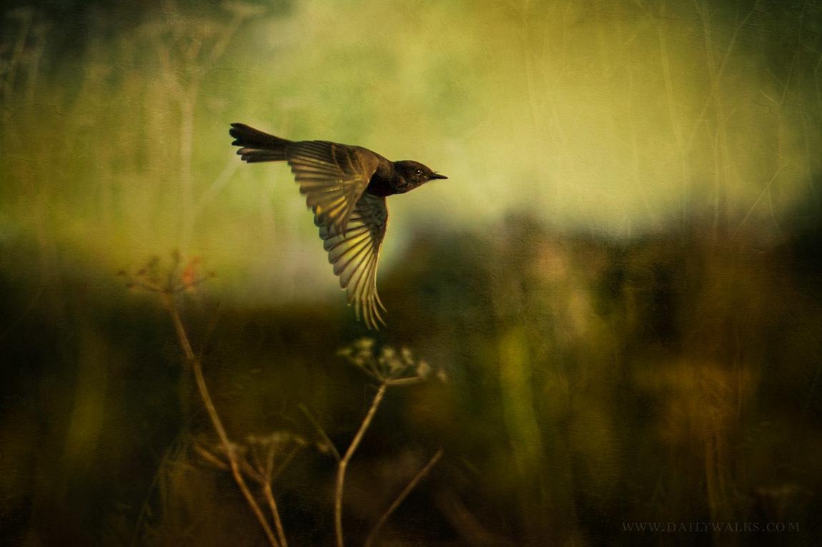 Wandering Wings