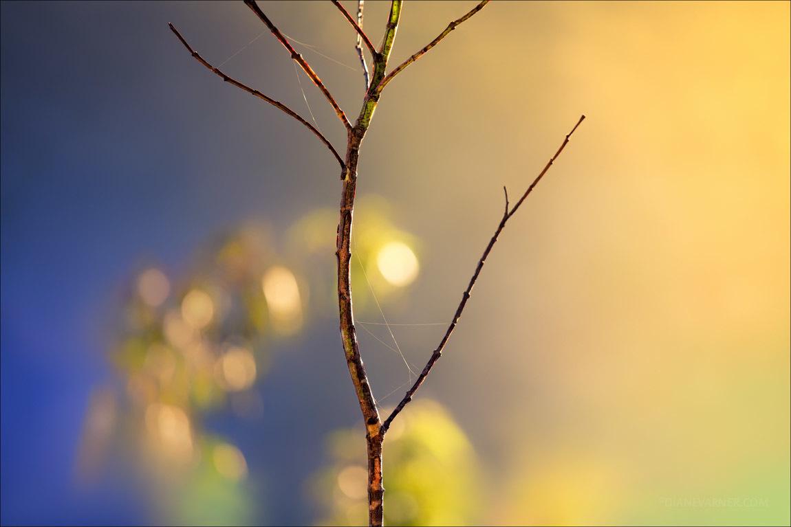 stillness_no1_11_09_101881_fnl.jpg