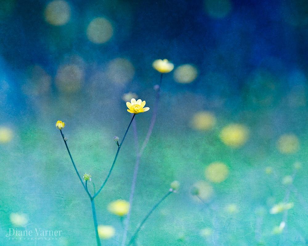 PASSING OF YELLOW WILDFLOWERS