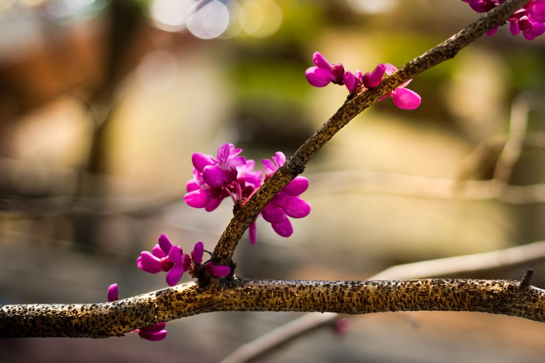Spring in Tokyo!