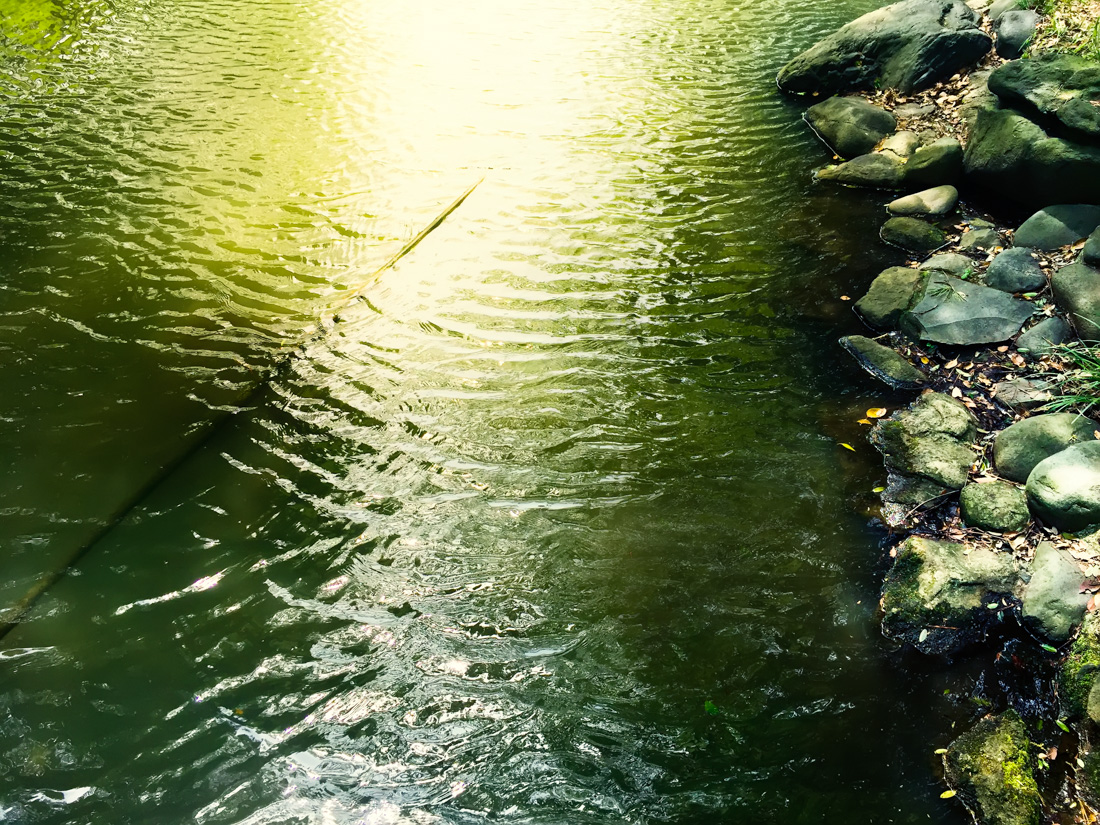 Pondering Reflections - Tokyo