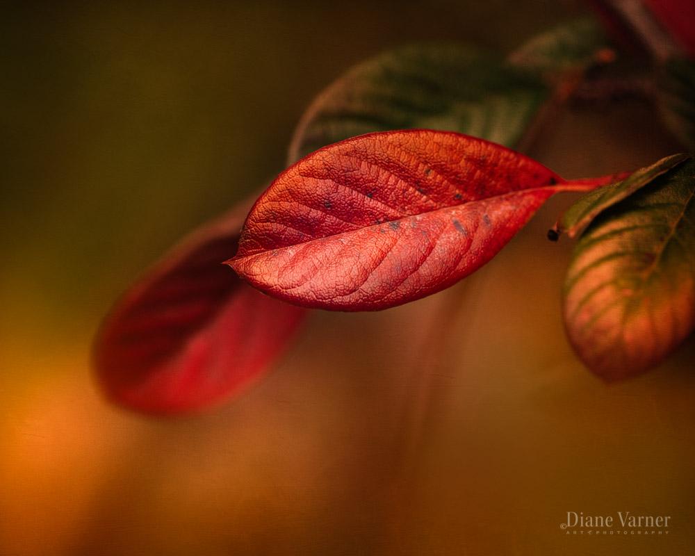 1_autumns_expressions_3_26_061098_fnl.jpg