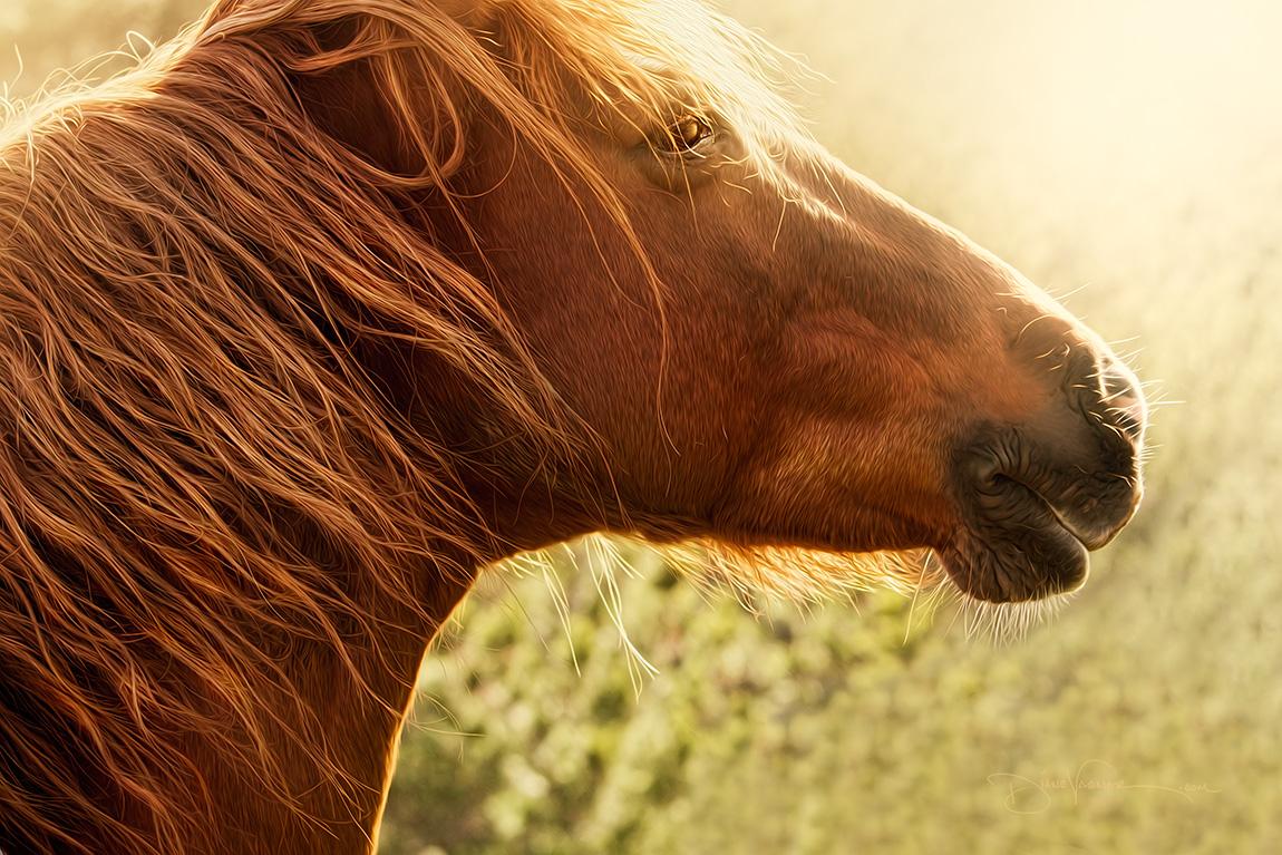 gallop_onward_1045.jpg