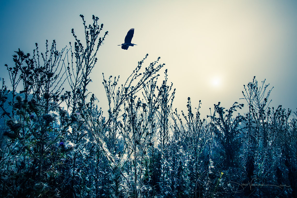 winter_weeds_9224_fnl.jpg