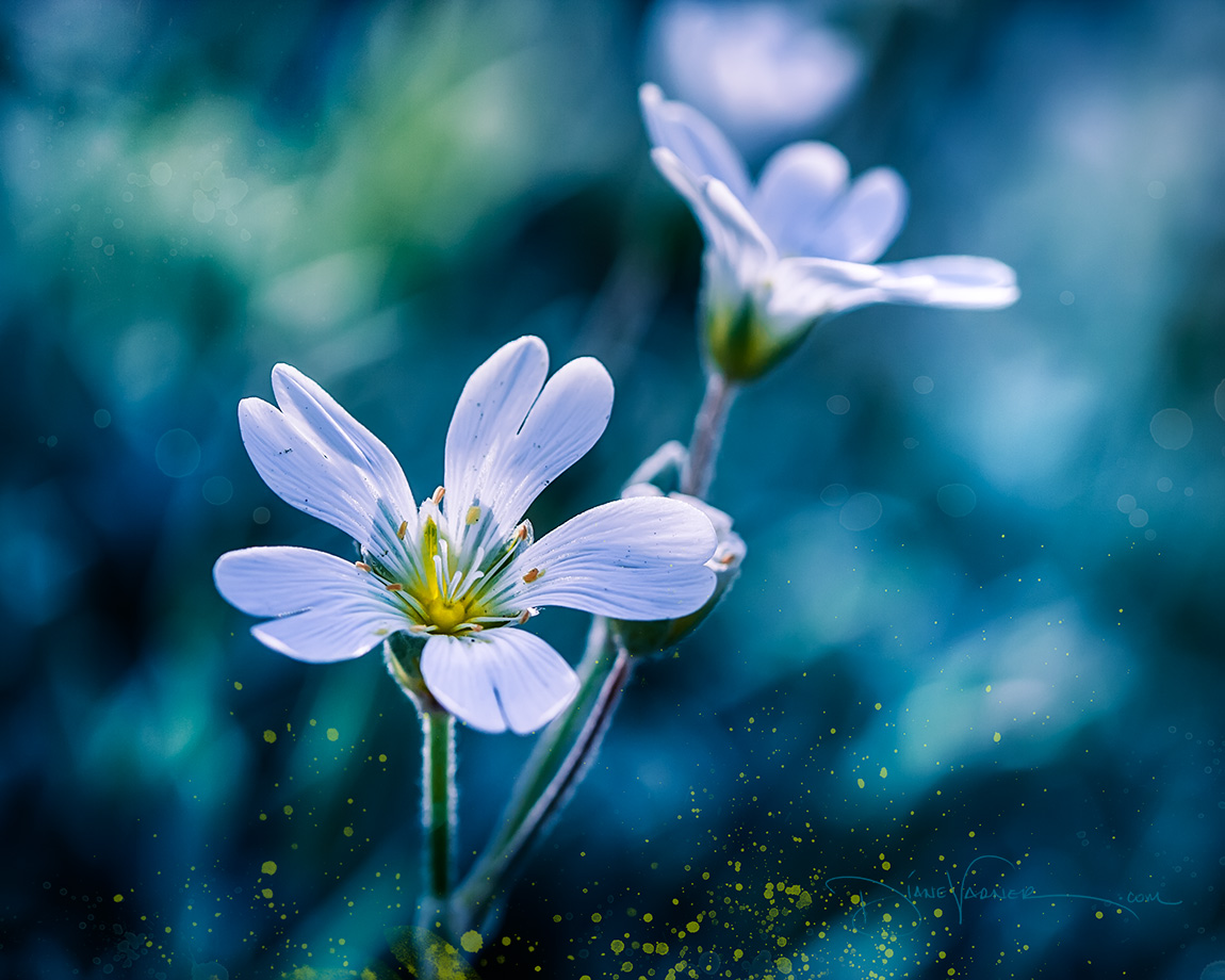 Tender Touch - Spring Flowers