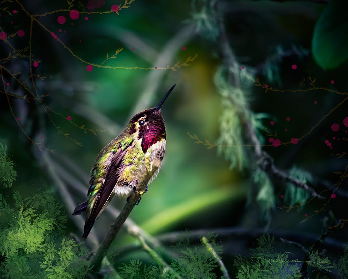 Baby Hummingbird Waiting for Mom