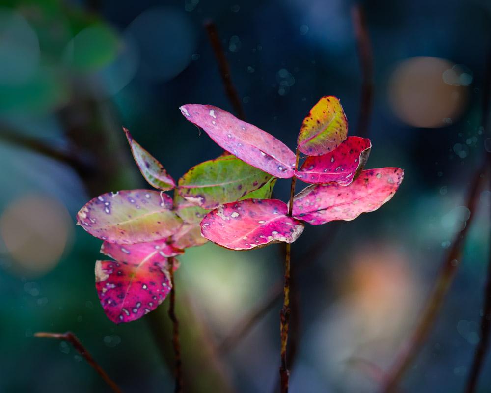 4_28_15_montara_flower_field_6604_fnl.jpg