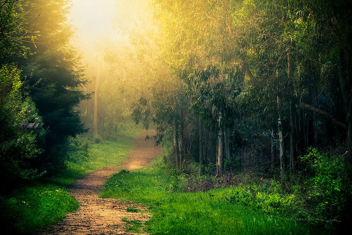 Insistence of Light