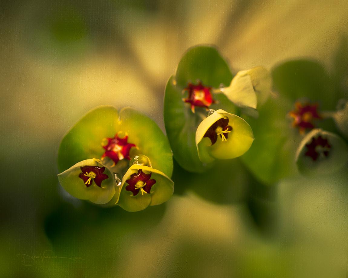 Flowers Closeup - Beautiful Nuances