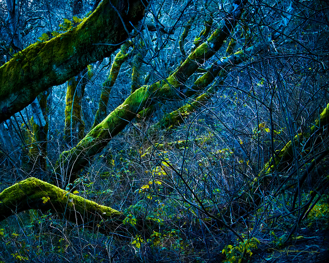 Entangled Branches