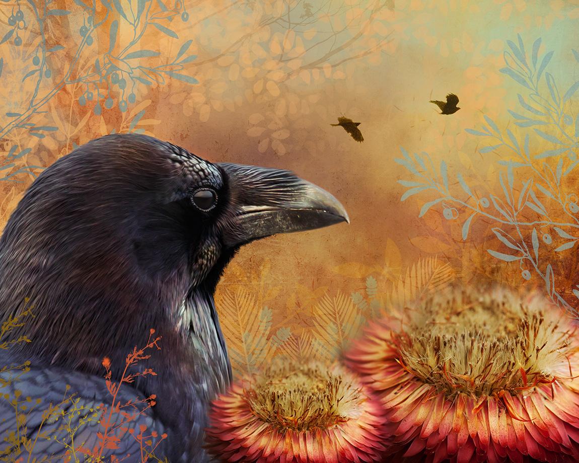 7_18_17_Raven_landscape_VARNER.jpg