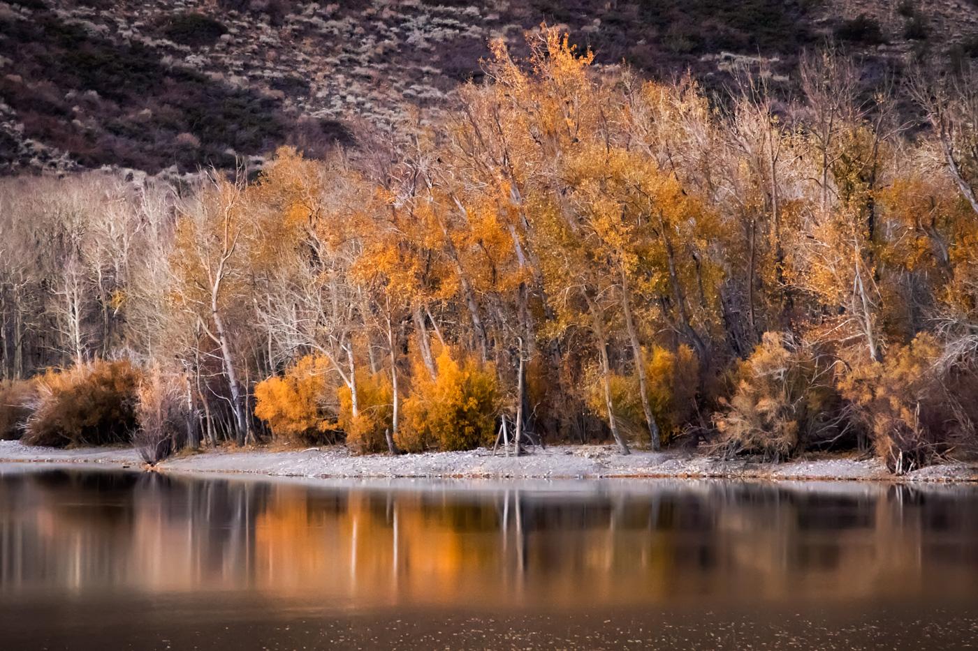 Convict Lake Shore - Eastern Sierra - Aspen - Late Autumn Color