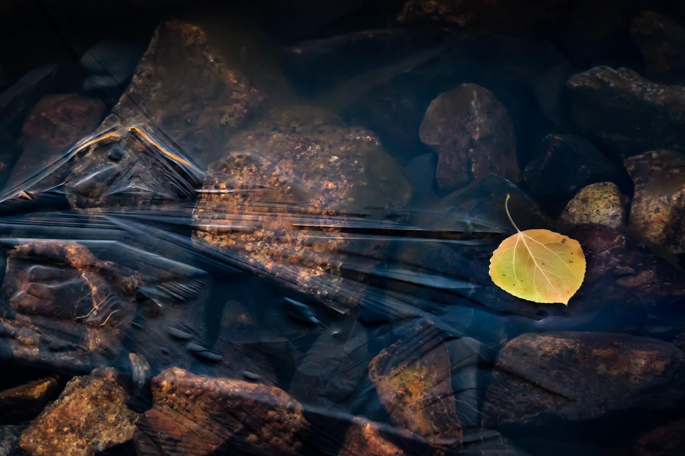 Icy Leaf Waters - Parker Lake - Eastern Sierra