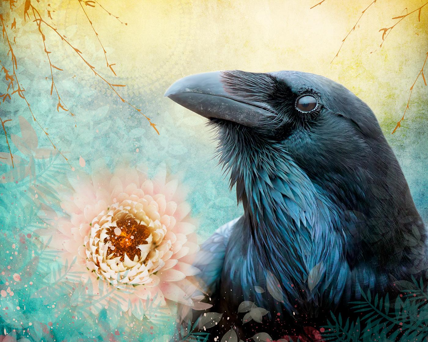 My Raven Companions