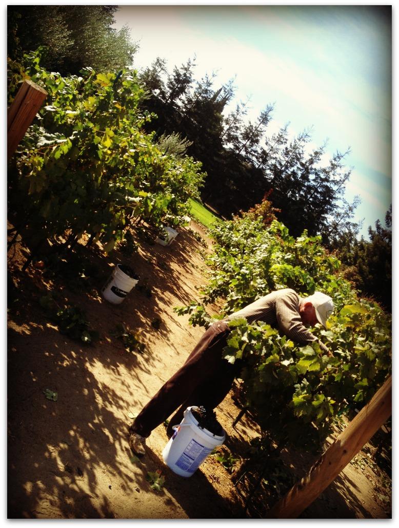 2012 Harvest
